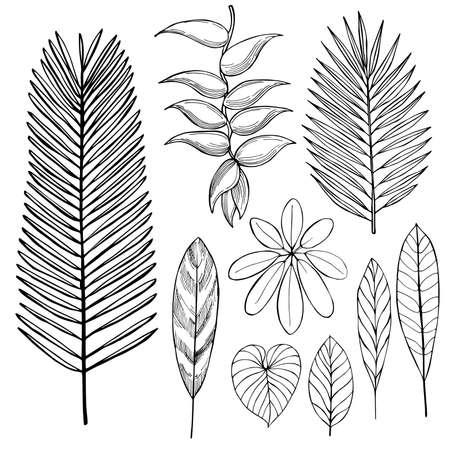 Hand drawn tropical plants. Leaves and flowers sketch illustration. Ilustração Vetorial