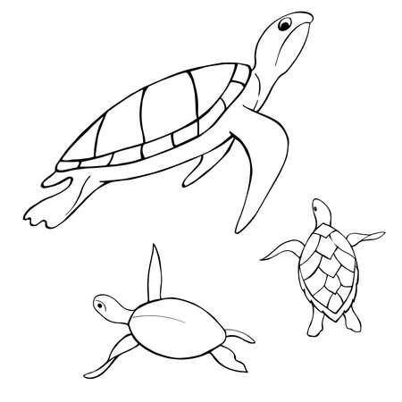 Underwater turtle. Vector sketch illustration. Ilustração