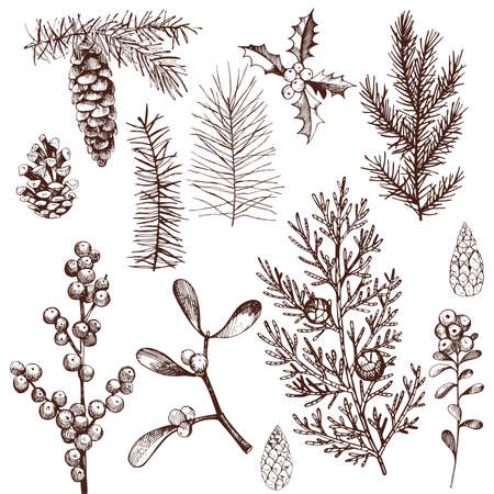 Christmas plants set. Vector hand-drawn illustration. Vector Illustratie