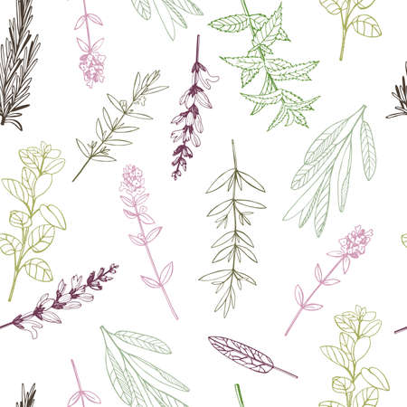 Vector seamless pattern. with hand drawn herbs. Sketch illustration.