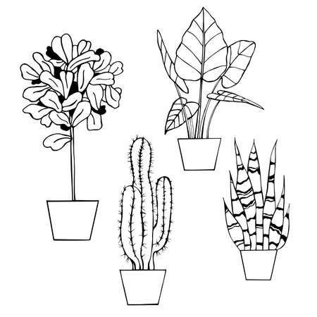 Hand drawn houseplants. Vector sketch illustration.
