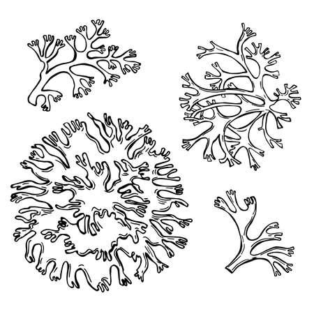 Hand drawn oakmoss (Evernia prunastri) .Vector sketch illustration. Vektorgrafik