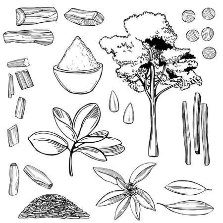 Hand drawn Sandalwood (Santalum) set. Vector sketch illustration. Illusztráció