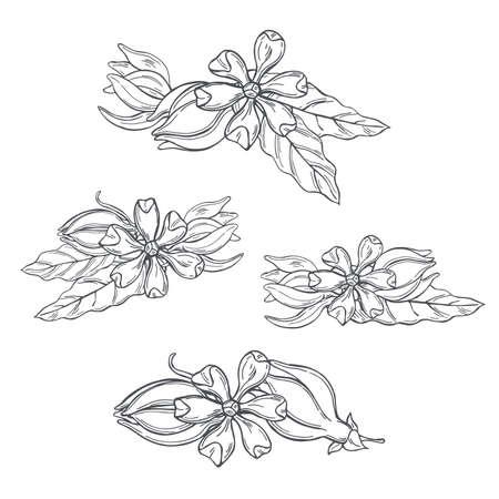 Hand drawn Ylang-Ylang flowers on white background. Vector sketch illustration. Vector Illustration