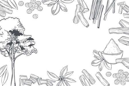 Hand drawn Sandalwood (Santalum). Sketch illustration.Vector background. Illusztráció
