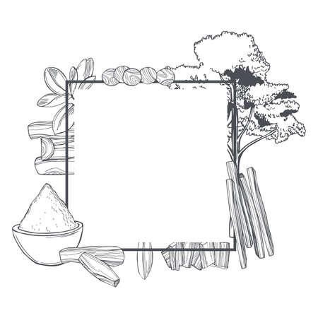 Hand drawn Sandalwood (Santalum) set on white background. Sketch illustration.Vector frame. Vettoriali