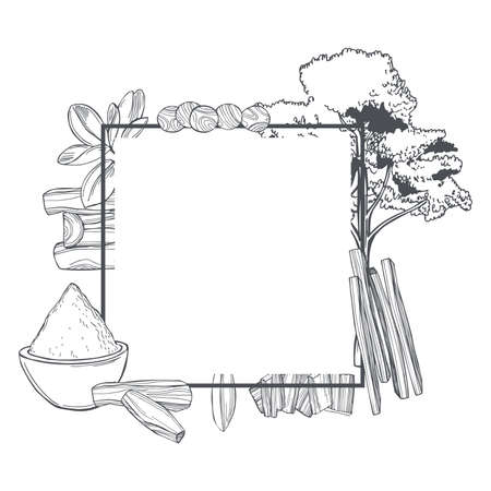 Hand drawn Sandalwood (Santalum) set on white background. Sketch illustration.Vector frame. Vector Illustratie