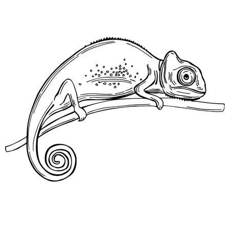 Hand drawn chameleon on white background. Vector sketch illustration. Vecteurs
