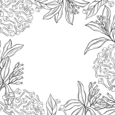 Vector background with hand drawn clove. The pods and flowers. Sketch illustration.