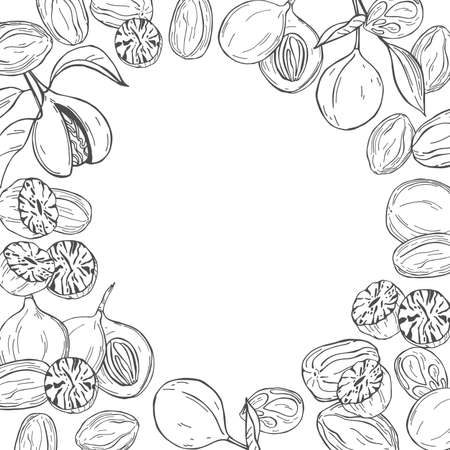 Hand drawn nutmeg. Vector background. Sketch illustration. Imagens - 157998960