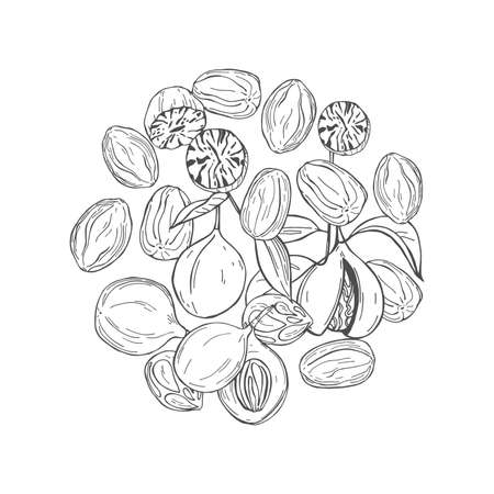 Hand drawn nutmeg in a circle. Vector sketch illustration. Imagens - 157982692