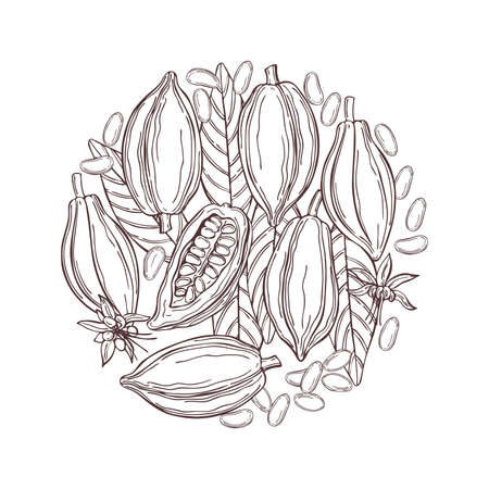 Hand drawn cocoa bean in a circle. Vector sketch illustration
