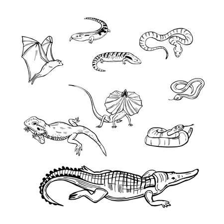 Hand drawn reptiles australia. Snakes, lizards. Vector sketch illustration.