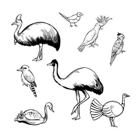 Hand drawn birds of australia. Vector sketch illustration.