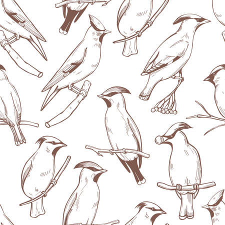 Hand drawn waxwing birds on white background. Vector seamless pattern. 向量圖像