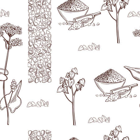 Hand drawn Buckwheat plant оn white background. Vector seamless pattern.