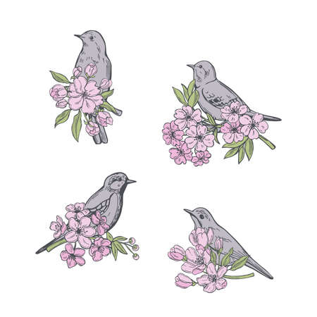 Hand drawn spring flowers and birds. Vector sketch illustration.