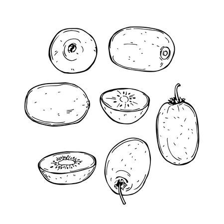 Hand drawn kiwi fruits on white background.Vector sketch illustration.