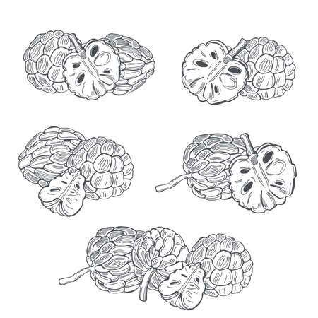 Hand drawn Custard apple or Sugar apple on white background.Vector sketch illustration. Illusztráció
