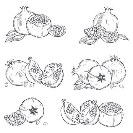 Hand drawn pomegranate on white background. Vector sketch illustration.