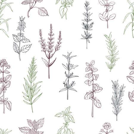Hand drawn spicy herbs. Vector seamless pattern. Vettoriali