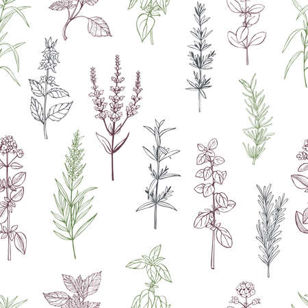 Hand drawn spicy herbs. Vector seamless pattern. Vektorové ilustrace