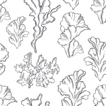 Hand drawn edible green algae. Ulva lactuca (sea lettuce) on white background. Vector seamless pattern.