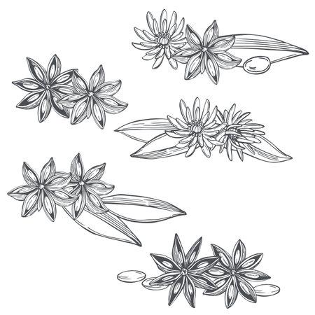 Hand drawn star anise on white background. Vector sketch illustration. Vettoriali