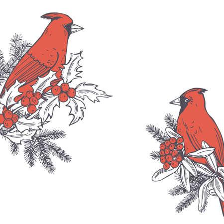 Hand drawn winter birds.Red cardinals on white backgrounds. Vector sketch illustration. Vektorové ilustrace