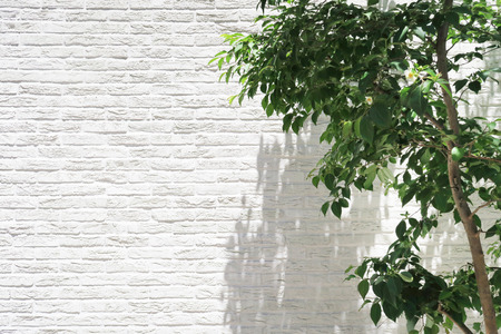 white wall and green leaf