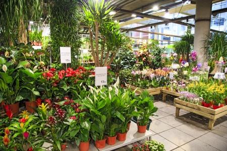 Het interieur van de grote bloemen winkel in Parijs