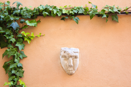 ivy wall: Wall in Provence