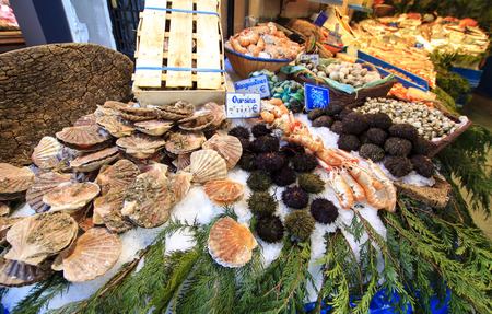 Sea urchins and scallops exposed for sale photo