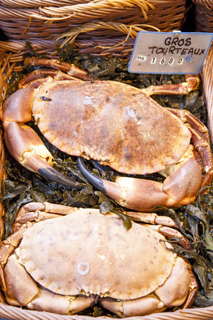Closeup of two big crabs for sale