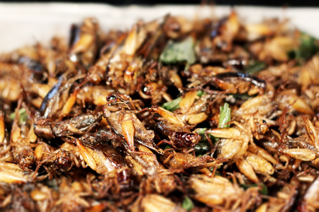 cricket insect: Fried grasshoppers, Bangkok, Thailand
