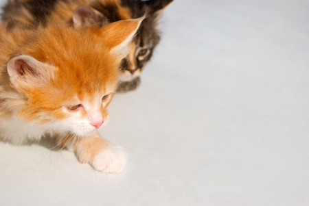 living things: Nice small babes of the cat, close-up. Stock Photo