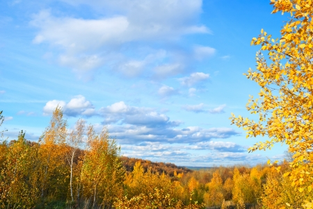 Autumn landscape with forest and sky  photo