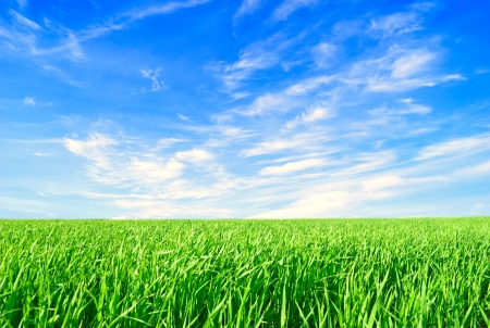 spaciousness: Background sky, clouds and the grass on a summer day, horizontally