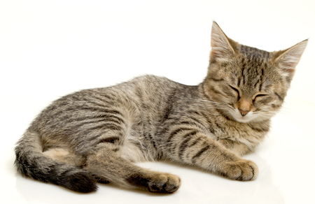 cope: Cats help to cope with depression and bad mood  Stock Photo