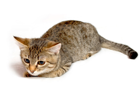 Rayas gatito divertido sobre un fondo blanco Foto de archivo - 25805963