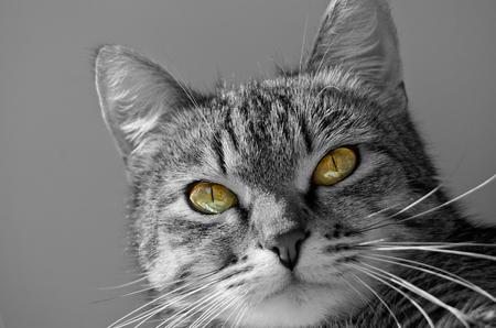 Gato atigrado gris sobre un fondo claro . Foto de archivo - 76658931