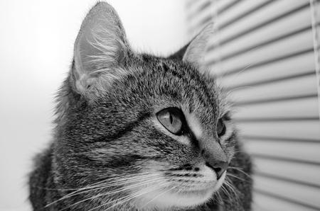 Gato de tabby gris sobre un fondo claro. Foto de archivo - 88036968
