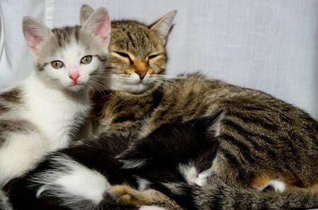 Cat family of little kittens and their mother cat are resting nearby. Stok Fotoğraf
