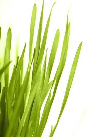 green grass  photo