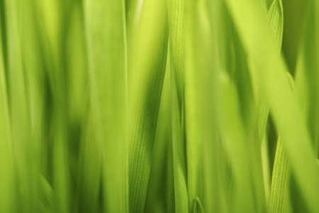 Beautiful Grass photo