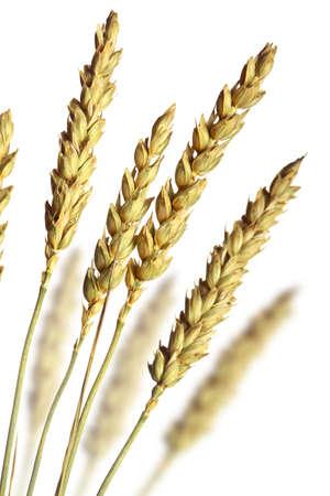 avena: el trigo pila Foto de archivo