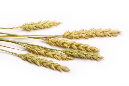 oats: wheat stack