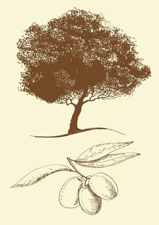 hoja de olivo: Aceite de oliva Vectores