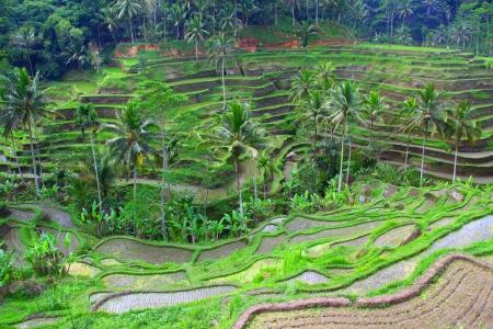 terrace rice photo