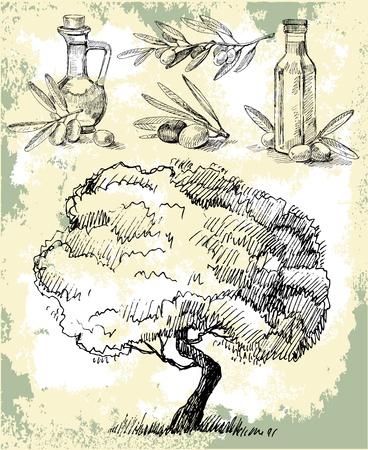 olivo arbol: Aceite de oliva Vectores